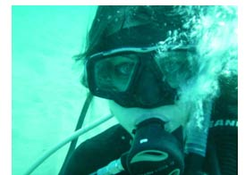 Scuba Diving on the Sunshine Coast